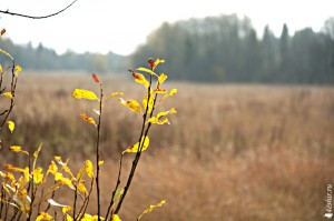 Осенний пейзаж - теплые тона