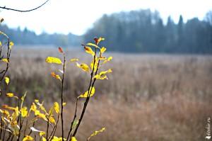 Осенний пейзаж - холодные тона