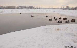 Зимний Петербург, фото