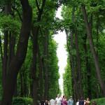 В Летнем саду, СПб