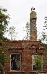 Аисты на разрушенном доме
