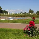 Цветы Нижнего сада, Ломоносов
