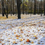 Осенне-зимняя