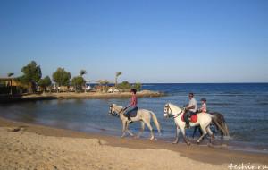 Лошади на пляже