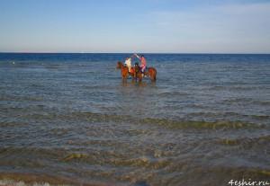Лошади в море