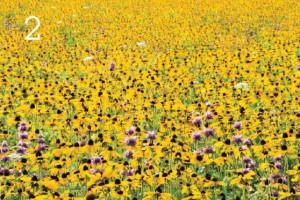 поля весной