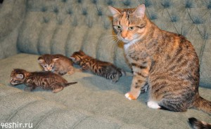 Тетя Руся с племянниками