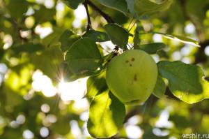 Удивленное яблоко