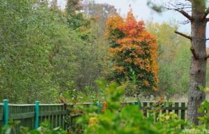 За забором - осень