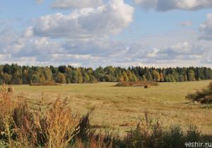 На осенних полях