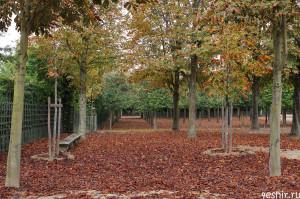 Осенний ковер из листьев