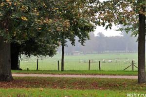 Овцы в Трианоне