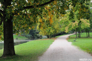 Осенняя дорожка
