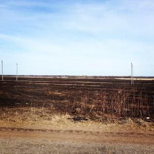 выжженное поле