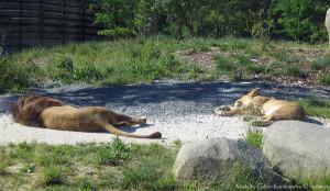 Жара в зоопарке