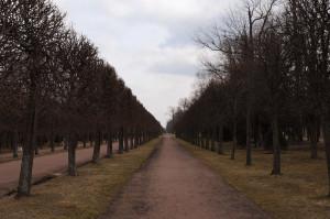 Пустынные дорожки Петергофа