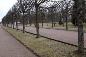 Ряды деревьев