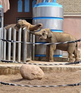 Слоновьи обнимашки