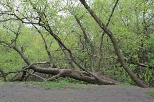 Горизонтальное дерево