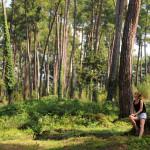 Сосновый бор в Пицунде