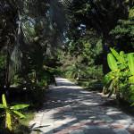 Аллея в Ботаническом саду