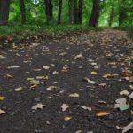 Осень в Выборге