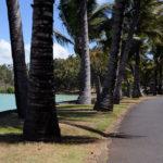 Пальмовая дорога