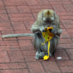 Обезьянка и банан
