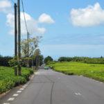 Чайная плататция Маврикия