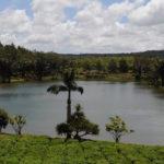 Озеро на чайной плантации