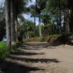 Дорога среди пальм