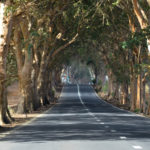 Дорога среди деревьев