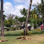 Стрижка пальм