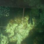 Кораллы с лодки с прозрачным дном