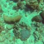 Кораллы и рыбы Индийского океана