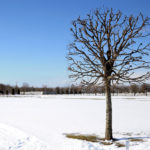 Уцелевшее дерево
