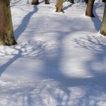 Лапы на снегу