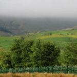 Туманное утро в сельской Англии