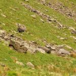 Овцы на склонах горы