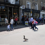 Утка на улице Кембриджа
