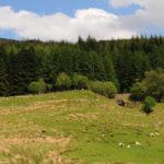 Овцы на склонах гор