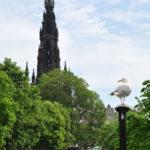 Парк на Принцесс-стрит и чайка