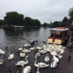 Лебеди в Стратфорде на Эйвоне