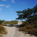 Выход к пляжу на Куршской косе
