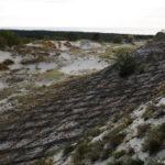Укрепление дюны