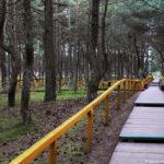 Танцующий лес, тропинки для туристов