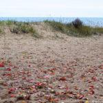 Осенние листья на пляже