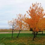 Оранжевые краски осени