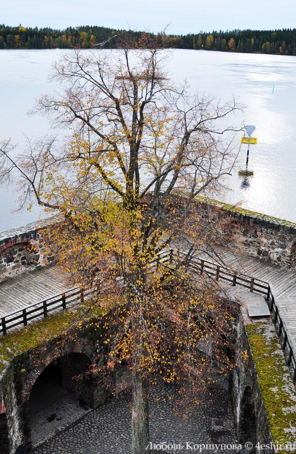 Дерево внутри крепостных стен
